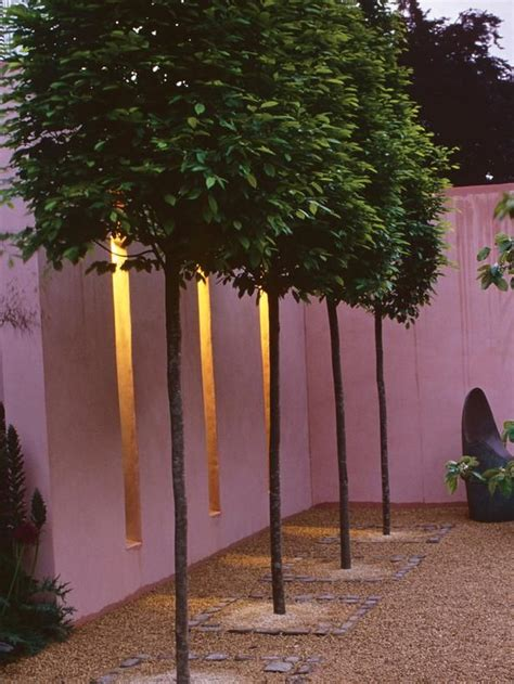 Trees that are pleached, or trained and trimmed to form a